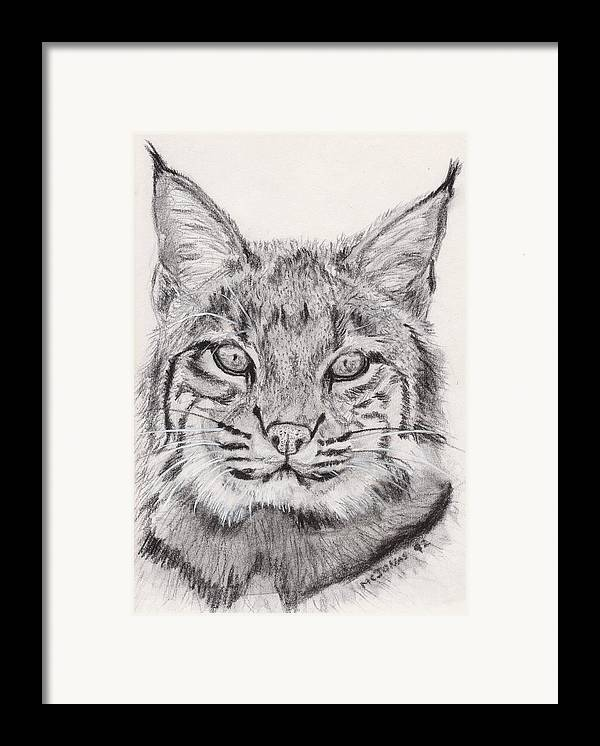 Nature Framed Print featuring the drawing Bobcat by Marqueta Graham