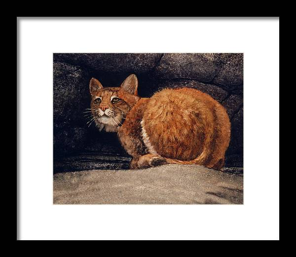 Wildlife Framed Print featuring the painting Bobcat On Ledge by Frank Wilson