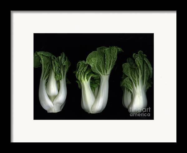 Slanec Framed Print featuring the photograph Bok Choy by Christian Slanec