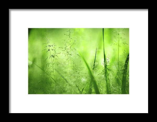 ## Photography ## Framed Print featuring the photograph Bokeh by Durk Talsma