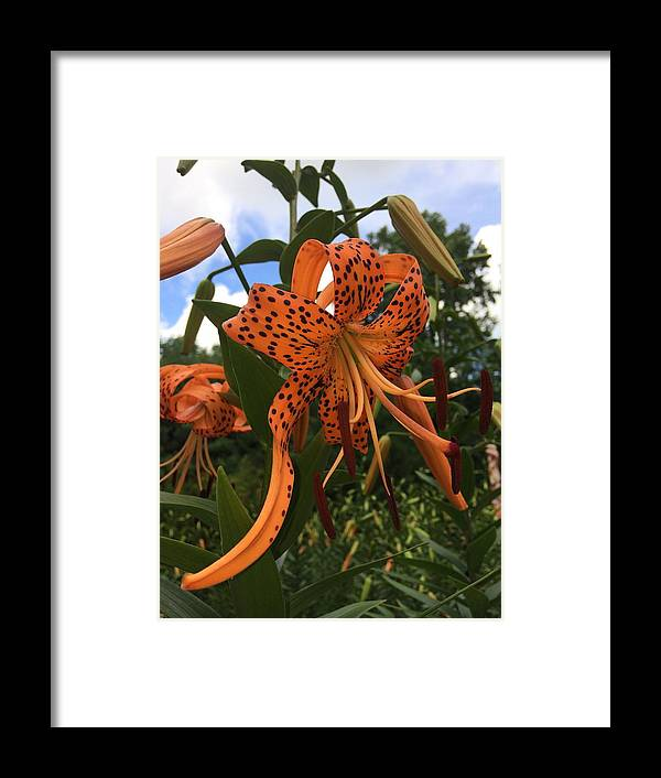 Flower Framed Print featuring the photograph Bold And Beautiful by William Bentley