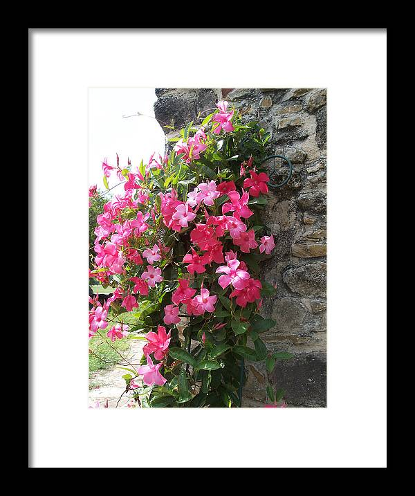 Flowers Framed Print featuring the photograph Bonita by Diana Gonzalez