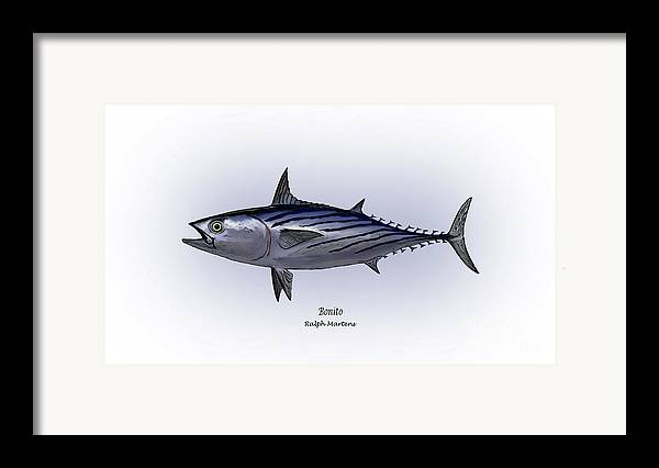 Bonito Framed Print featuring the painting Bonito by Ralph Martens