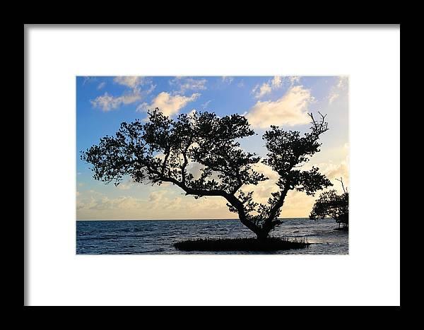 Florida Framed Print featuring the photograph Bonsai Inspiration by Joe Arwood