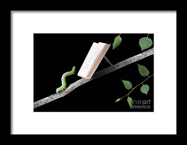 Worm Framed Print featuring the photograph Book Worm by Cindy Singleton