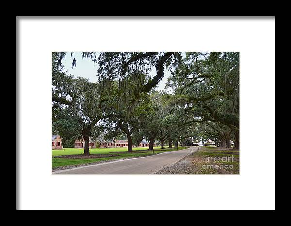 Boone Hall Plantation Framed Print featuring the photograph Boone Hall Plantation by Catherine Sherman