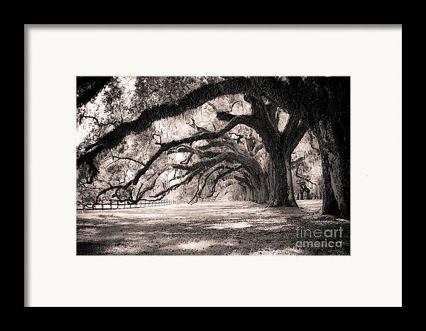Boone Hall Framed Print featuring the photograph Boone Hall Plantation Live Oaks by Dustin K Ryan