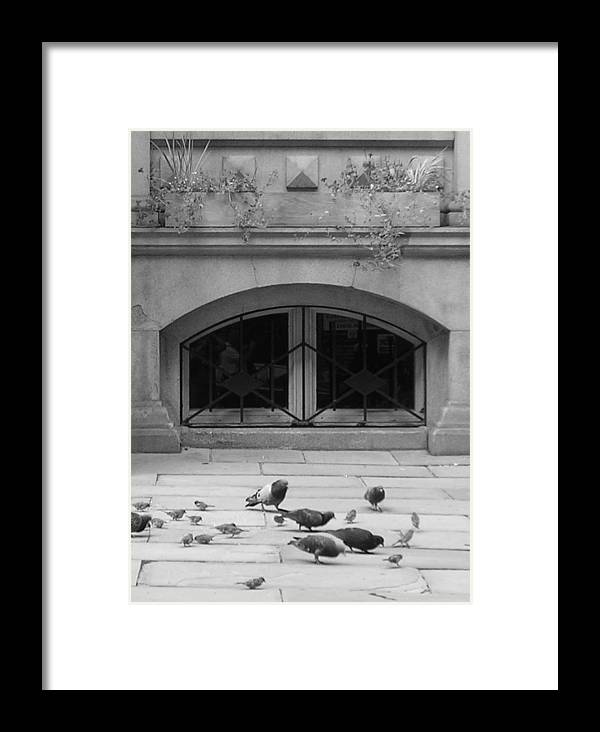 Pigeons Framed Print featuring the photograph Boston Scene by Nancy Ferrier
