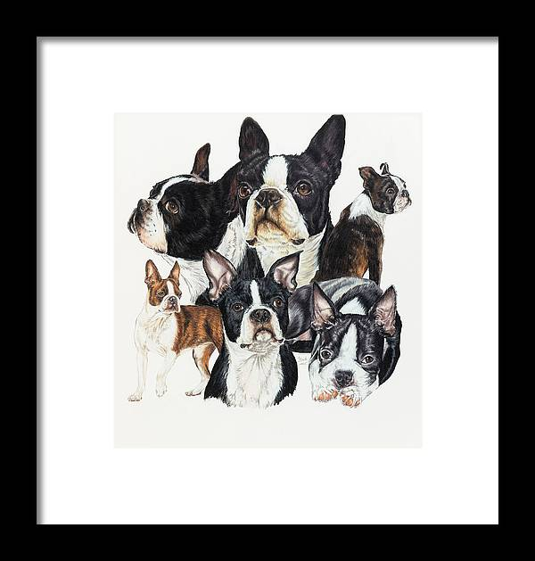 Non-sporting Group Framed Print featuring the drawing Boston Terrier by Barbara Keith