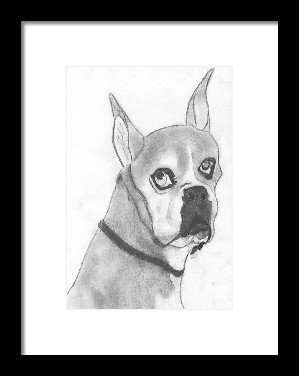 Boston Terrier Framed Print featuring the drawing Boston Terrier by Josh Bennett
