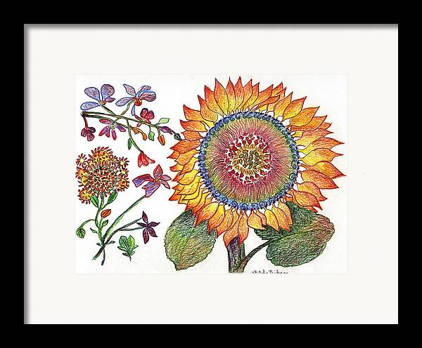 Sunflower Nature Flowers Drawing Julie Richman Framed Print featuring the painting Botanical Flower-46 Sunflower Drawing by Julie Richman