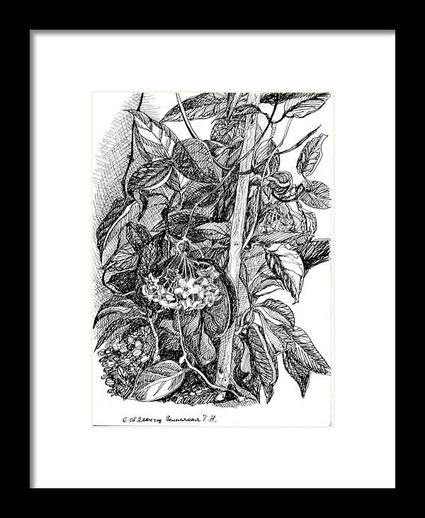 Graphics Framed Print featuring the drawing Botanical Series by Tamara Zemlyanaya