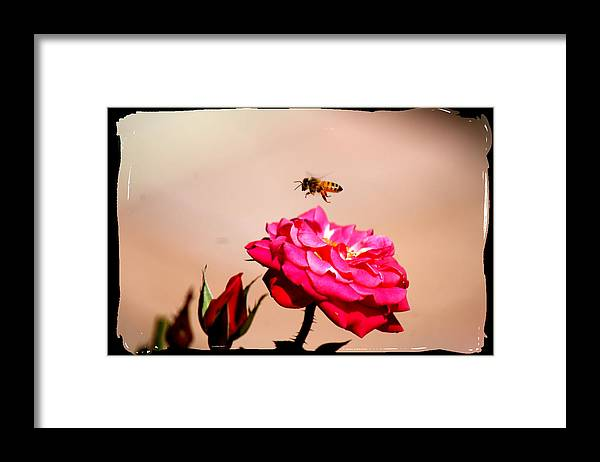 Bee Framed Print featuring the photograph Both Beeuties by Ellen Lerner ODonnell