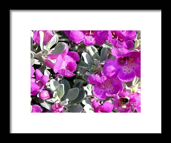 Nature Framed Print featuring the photograph Bottoms Up by Lucyna A M Green