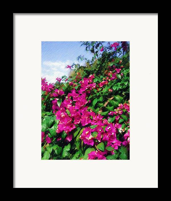 Bougainvillea Framed Print featuring the photograph Bougainvillea by Sandy MacGowan