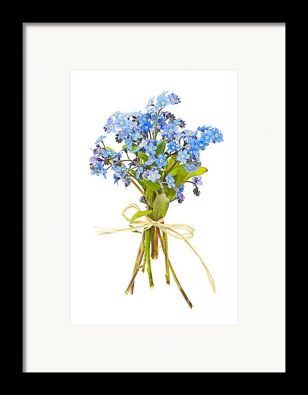 Bouquet Framed Print featuring the photograph Bouquet Of Forget-me-nots by Elena Elisseeva