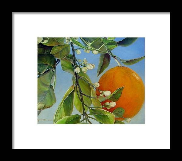 Floral Painting Framed Print featuring the painting Boutons d Oranges by Muriel Dolemieux
