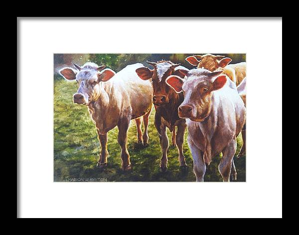 Animals Framed Print featuring the painting Bovine Curiosity by Marion Hylton
