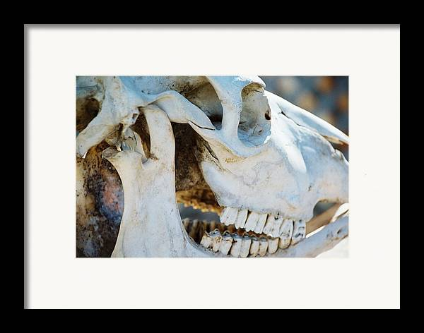 Skull Framed Print featuring the photograph Bovinic Purpose by Jennifer Trone