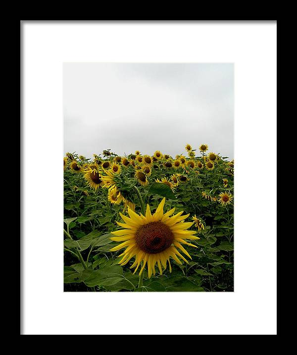 Sunflower Framed Print featuring the photograph Bowing To The Crowd by Jeanette Oberholtzer