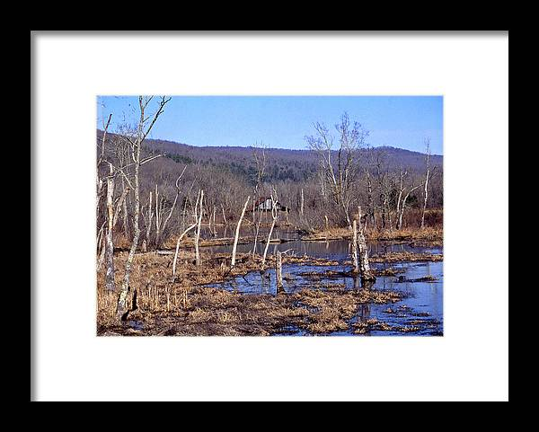 Framed Print featuring the photograph Boxely Swamp2 by Curtis J Neeley Jr