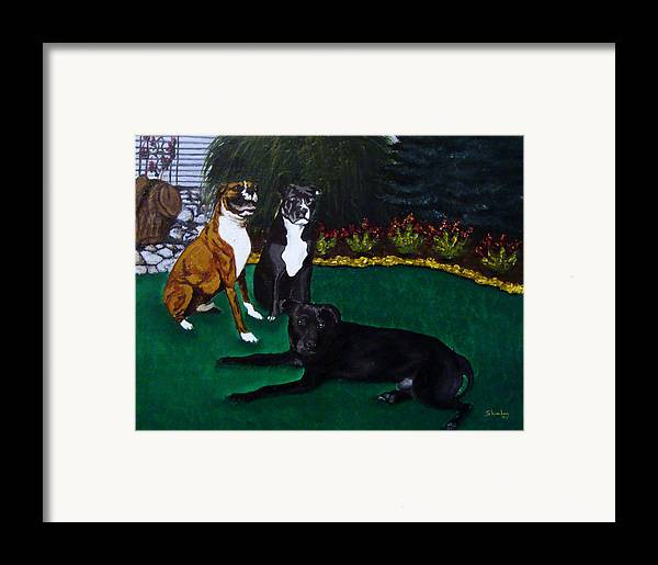 Boxer Framed Print featuring the painting Boxer Pitbull Mix by Amanda Schambon