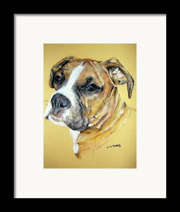 Dog Framed Print featuring the painting Boxer by Tanya Patey