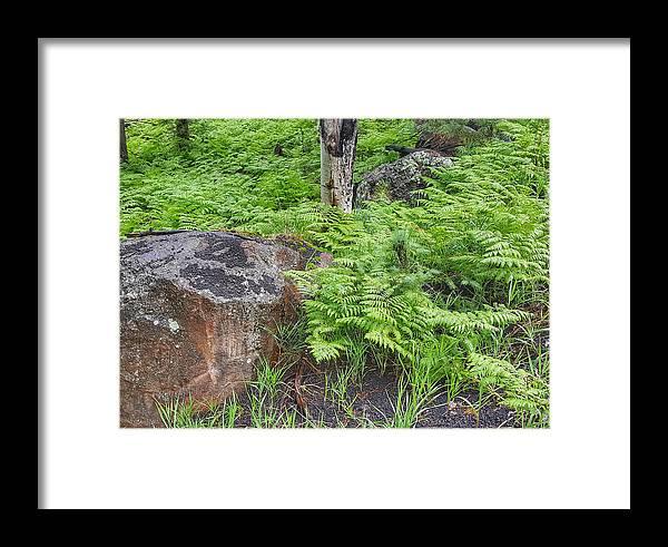 Fern Framed Print featuring the photograph Bracken Fern Meadow by Jim Thomas