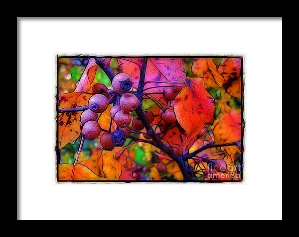 Bradford Framed Print featuring the photograph Bradford Pear In Autumn by Judi Bagwell