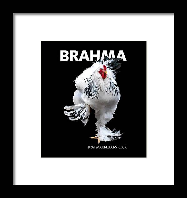 Brahma Framed Print featuring the digital art Brahma Breeders Rock T-shirt Print by Sigrid Van Dort
