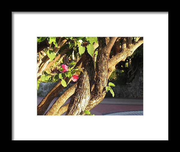 Pink Framed Print featuring the photograph Braided by Stephanie Richards