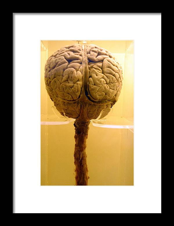 Jez C Self Framed Print featuring the photograph Brain Drain by Jez C Self