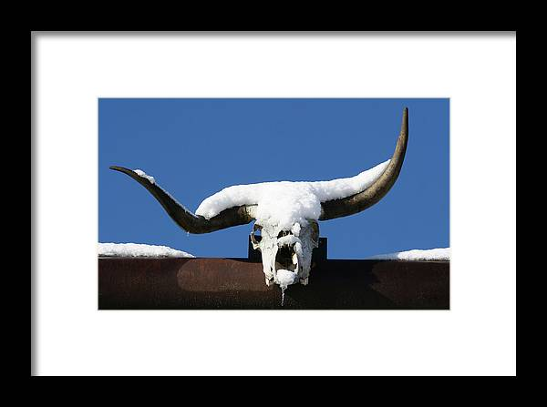 Horns Framed Print featuring the photograph Brain Freeze by Holly Ethan