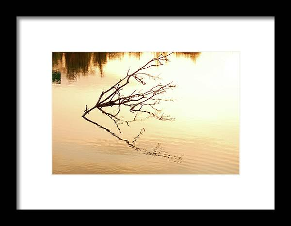 Branch Framed Print featuring the photograph Branch by Marcus L Wise