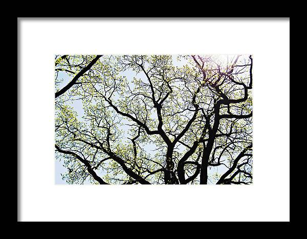 Branches Framed Print featuring the photograph Branches Against Sky In Spring Outback by HazelPhoto