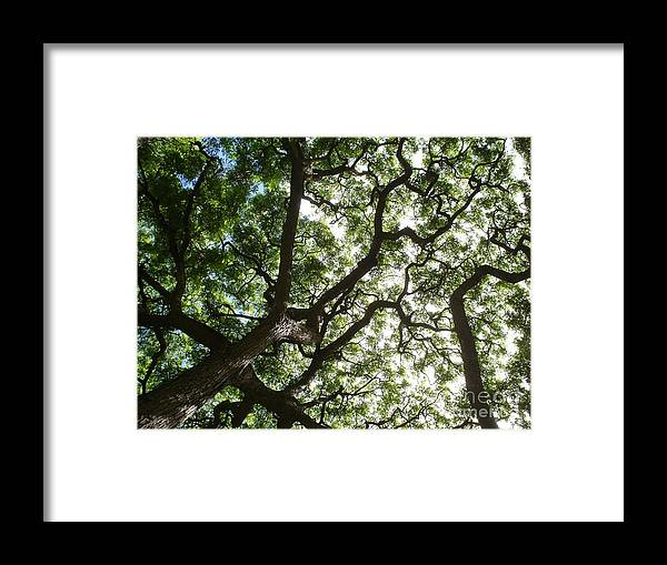 Tree's Branches Framed Print featuring the photograph Branches by Chandelle Hazen