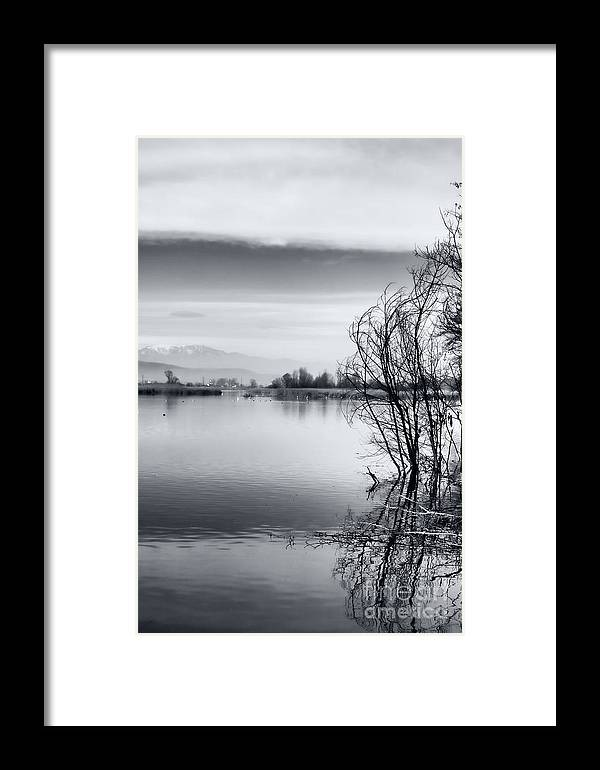Reflection Framed Print featuring the photograph Branches by Gabriela Insuratelu