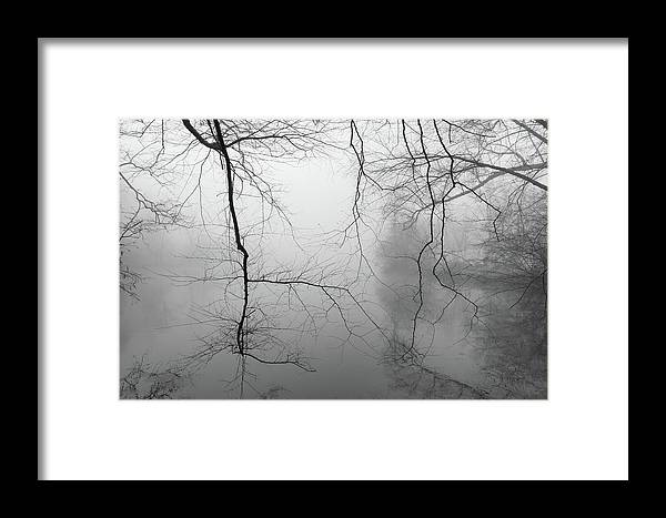 Lagoon Framed Print featuring the photograph Branches In The Morning Mist by Dan Farmer