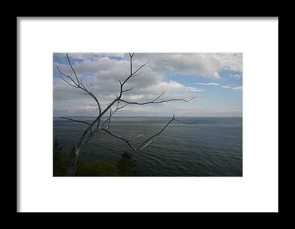 Landscape Framed Print featuring the photograph Branching Out by Dennis Curry