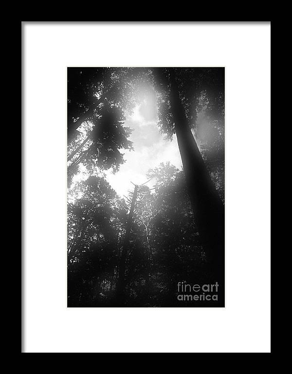 Trees Framed Print featuring the digital art Breathing Trees by Sven Brogren