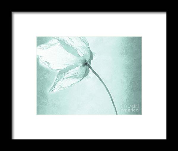 Flower Framed Print featuring the painting Breeze by Jacky Gerritsen