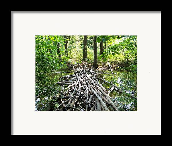 Framed Print featuring the photograph Bridging by Geraldine Liquidano