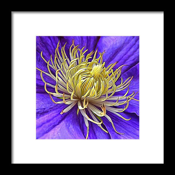 Framed Print featuring the photograph Bright Clematis Center by K Bella Flora Images