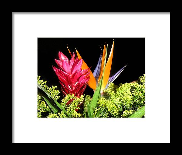Nature Framed Print featuring the photograph Bright Companions by Lucyna A M Green