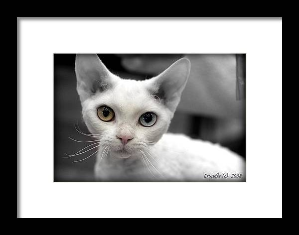 Rex Framed Print featuring the photograph Bright Eyes by Crystal Rolfe