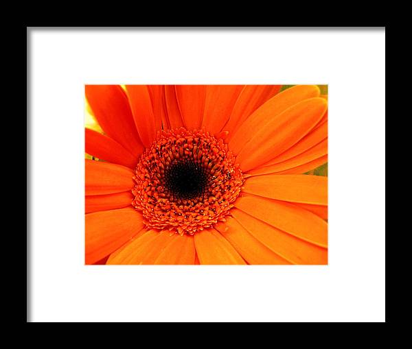 Flower Framed Print featuring the photograph Bright Red by Rhonda Barrett