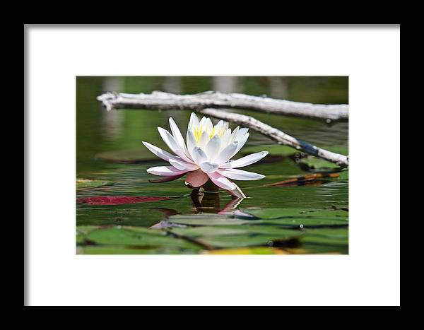 White Framed Print featuring the photograph Bright Spot by Michael Peychich
