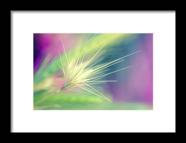 Bright Colors Framed Print featuring the digital art Bright Weed by Terry Davis