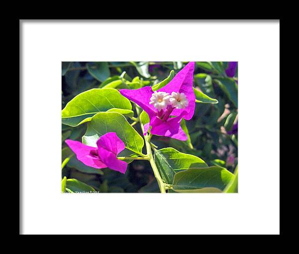 Flowers Framed Print featuring the photograph Brillant Blooms by Nicole I Hamilton