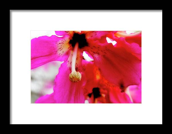 Flower Framed Print featuring the photograph Brilliance by Toni Hopper